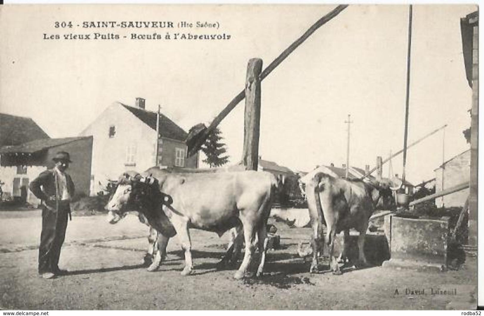 CPA - 70 - Saint Sauveur  - Les Vieux Puits - Boeufs à L' Abreuvoir - Gros Plan - Frankreich