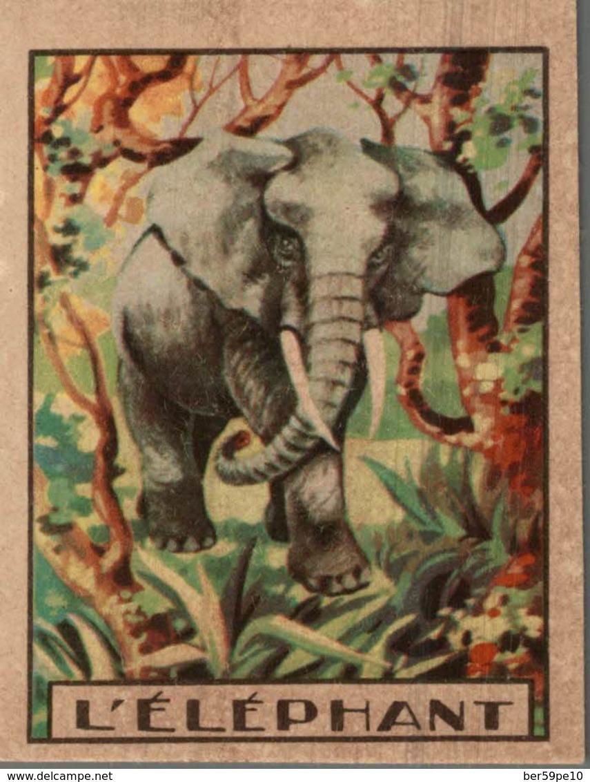 CHROMO  L'ELEPHANT - Chromo