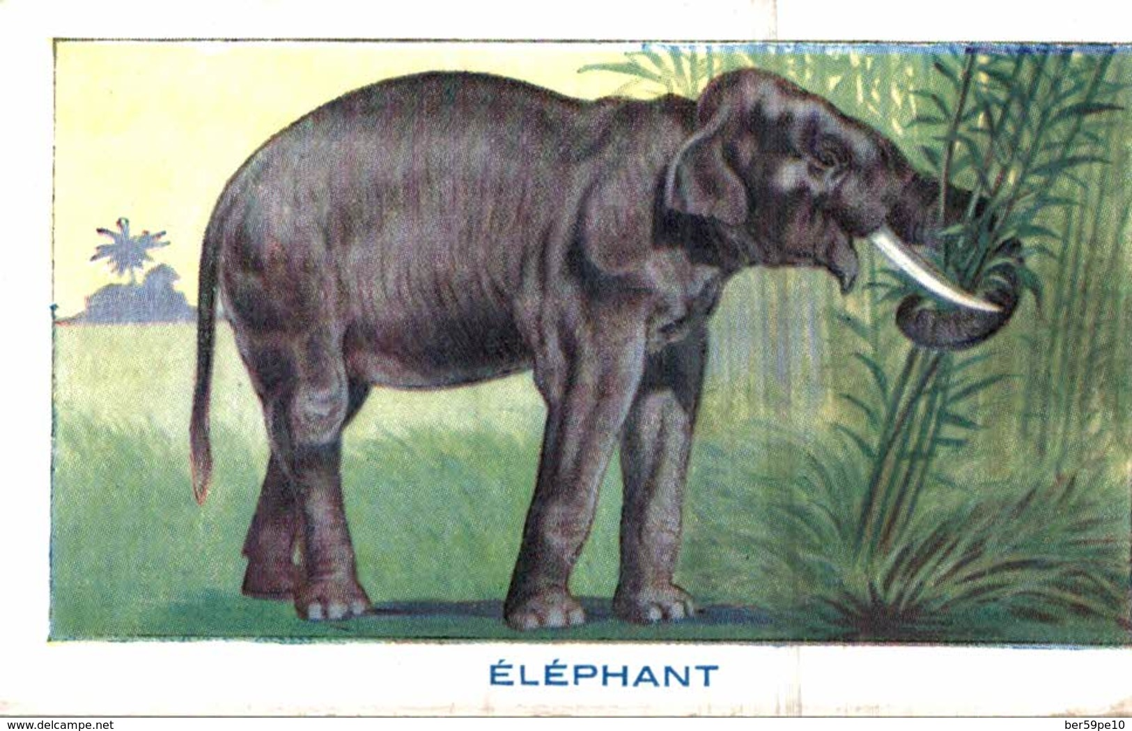 CHROMO BON POINT LE SIROP DE DESCHIENS  ELEPHANT - Otros