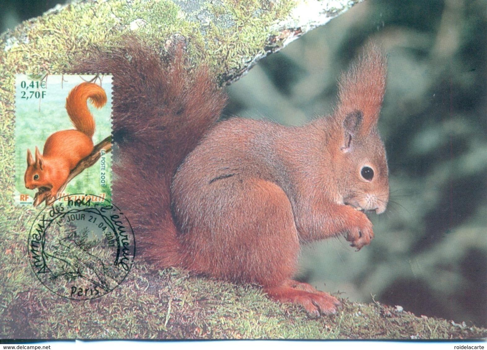 CM-Carte Maximum Card # 2001 - France # Animaux,animals #Rongeur,rodent,Nagetier # Écureuil,Squirrel,Eichhörnchen - Nager