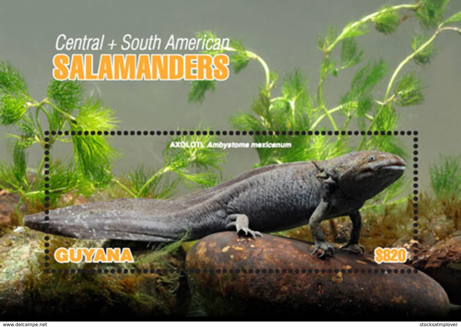 Guyana 2018 Fauna  Salamanders  I201901 - Guiana (1966-...)