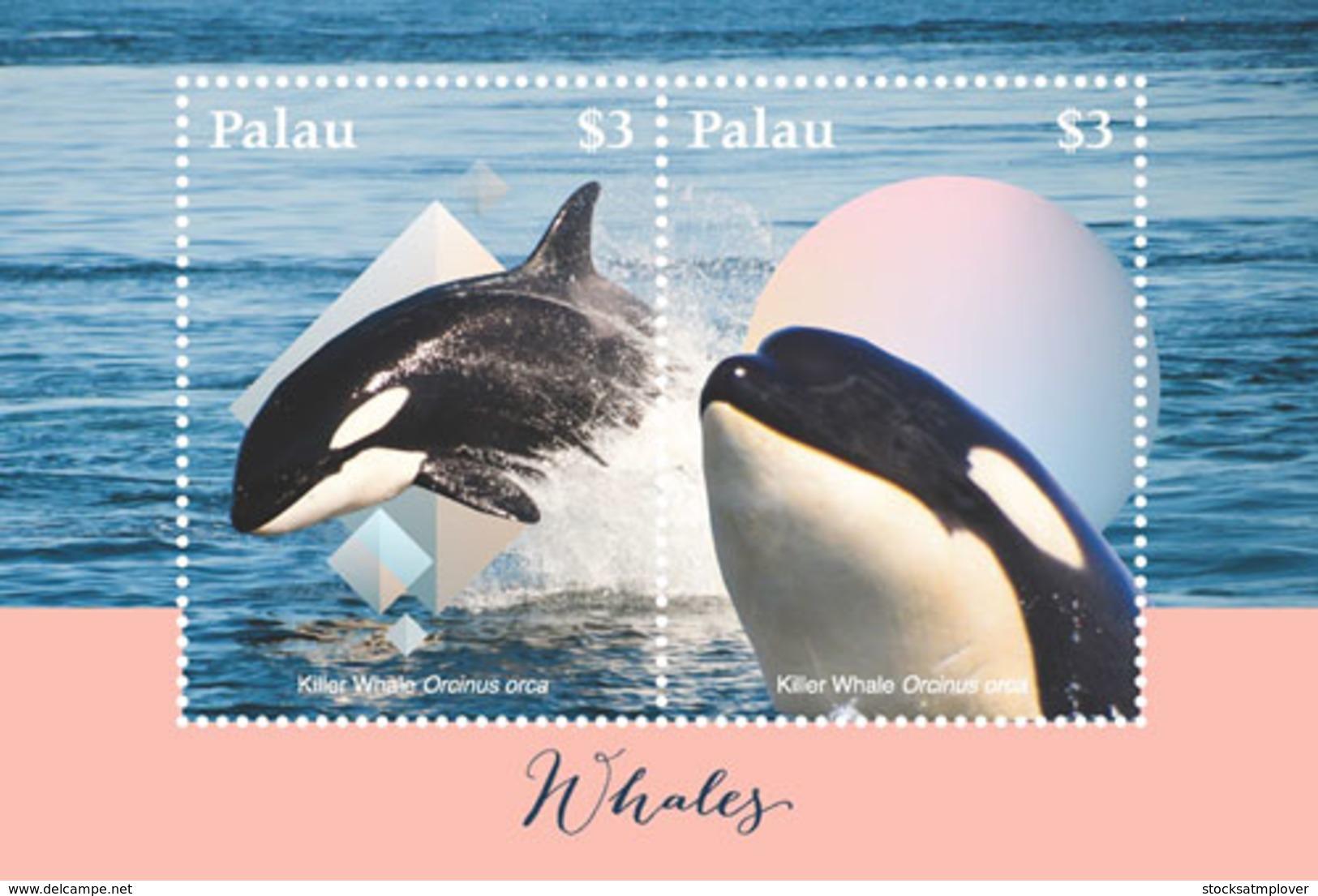 Palau 2018  Fauna Whales  I201901 - Palau