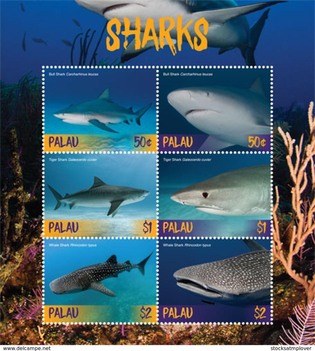 Palau 2018  Fauna Sharks  I201901 - Palau