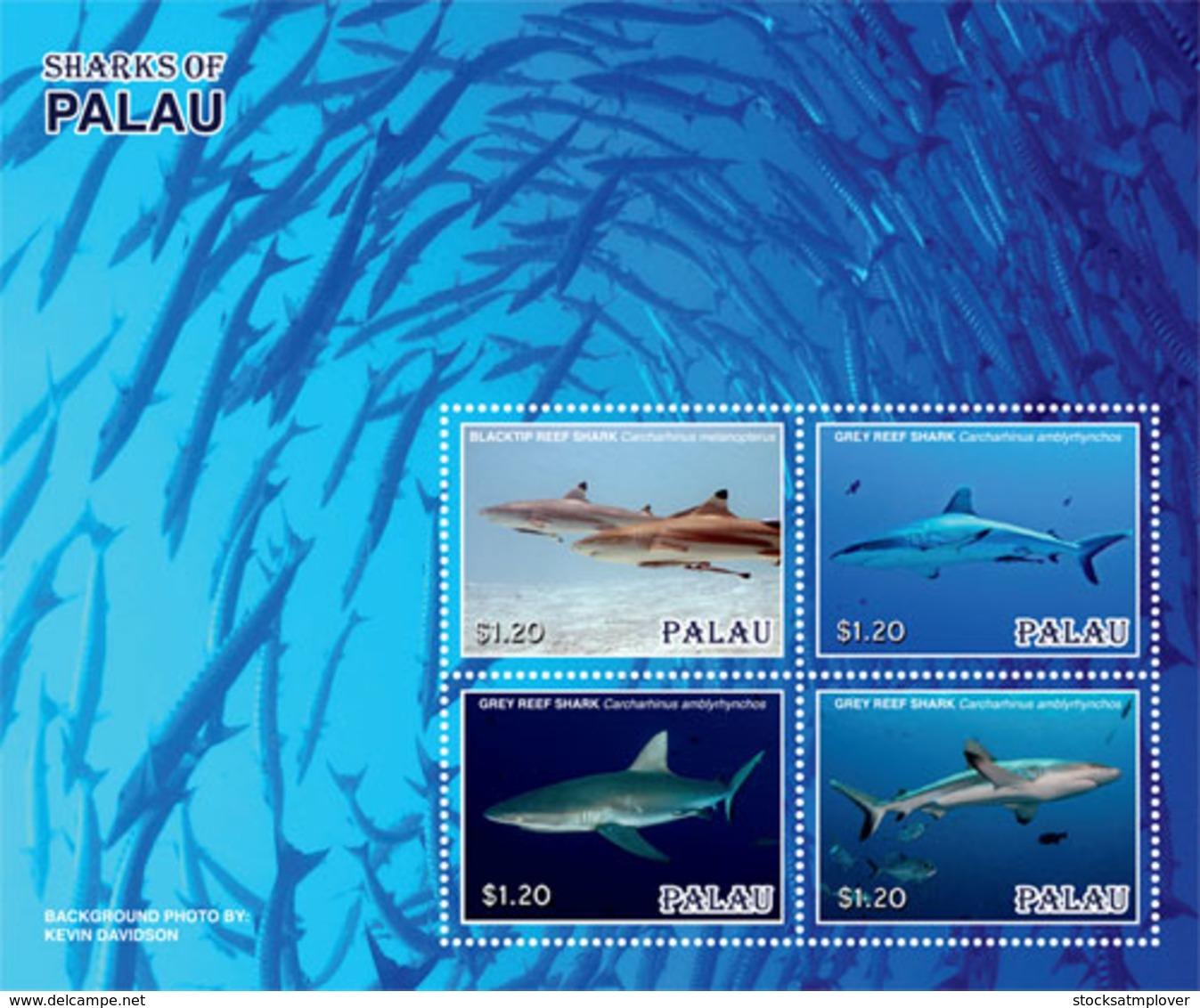 Palau 2019  Fauna Sharks Of Palau  I201901 - Palau