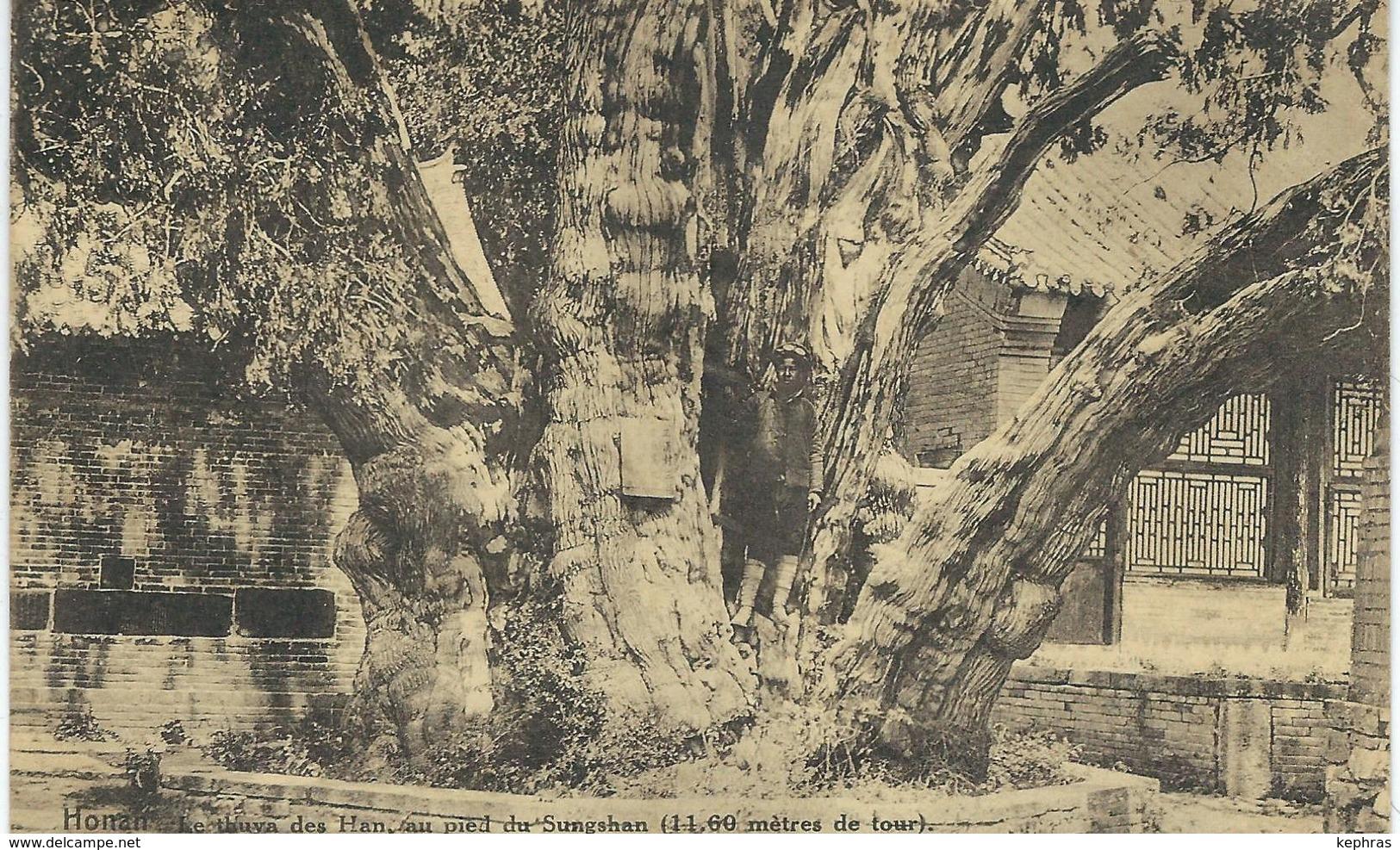 CHINE - CHINA -  HONAN - Le Thuya Des Han Au Pied Du Sungshan - Cachet De La Poste 1923 - Chine