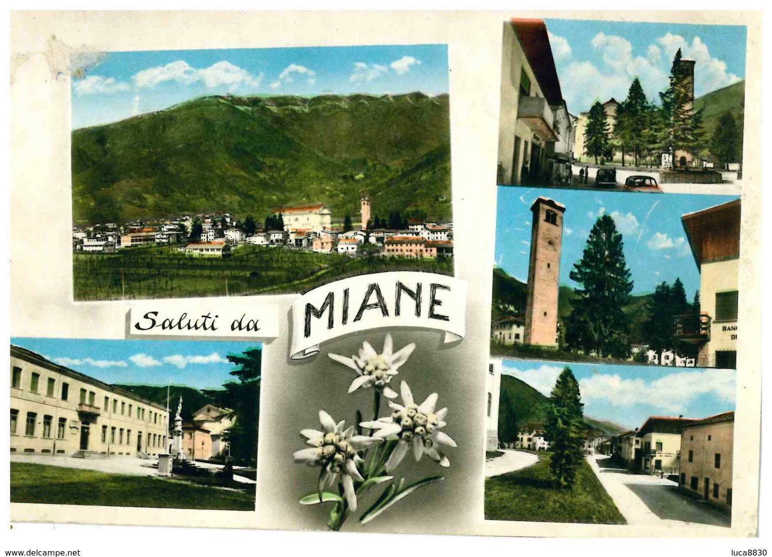 MIANE SALUTI DA - Treviso