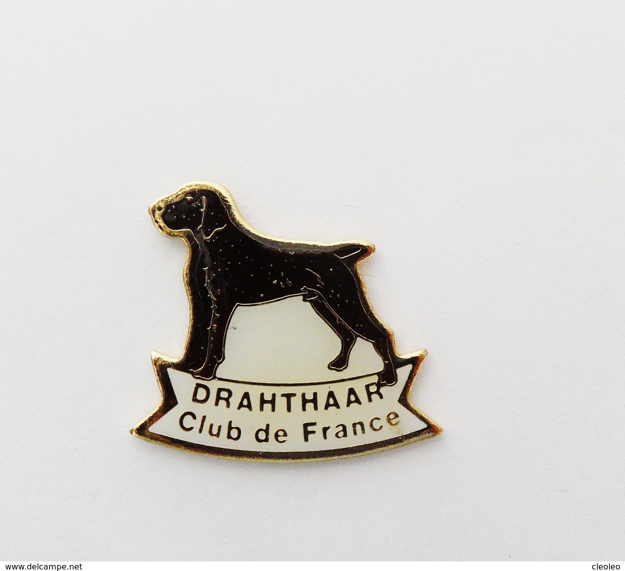Pin's Chien  Drahthaar Club De France - ANIMAUX - Animals