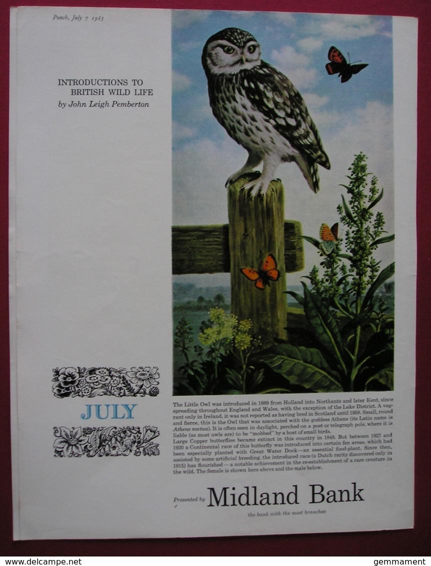 MIDLAND BANK -ORIGINAL 1965 MAGAZINE ADVERT. LITTLE OWL - Advertising