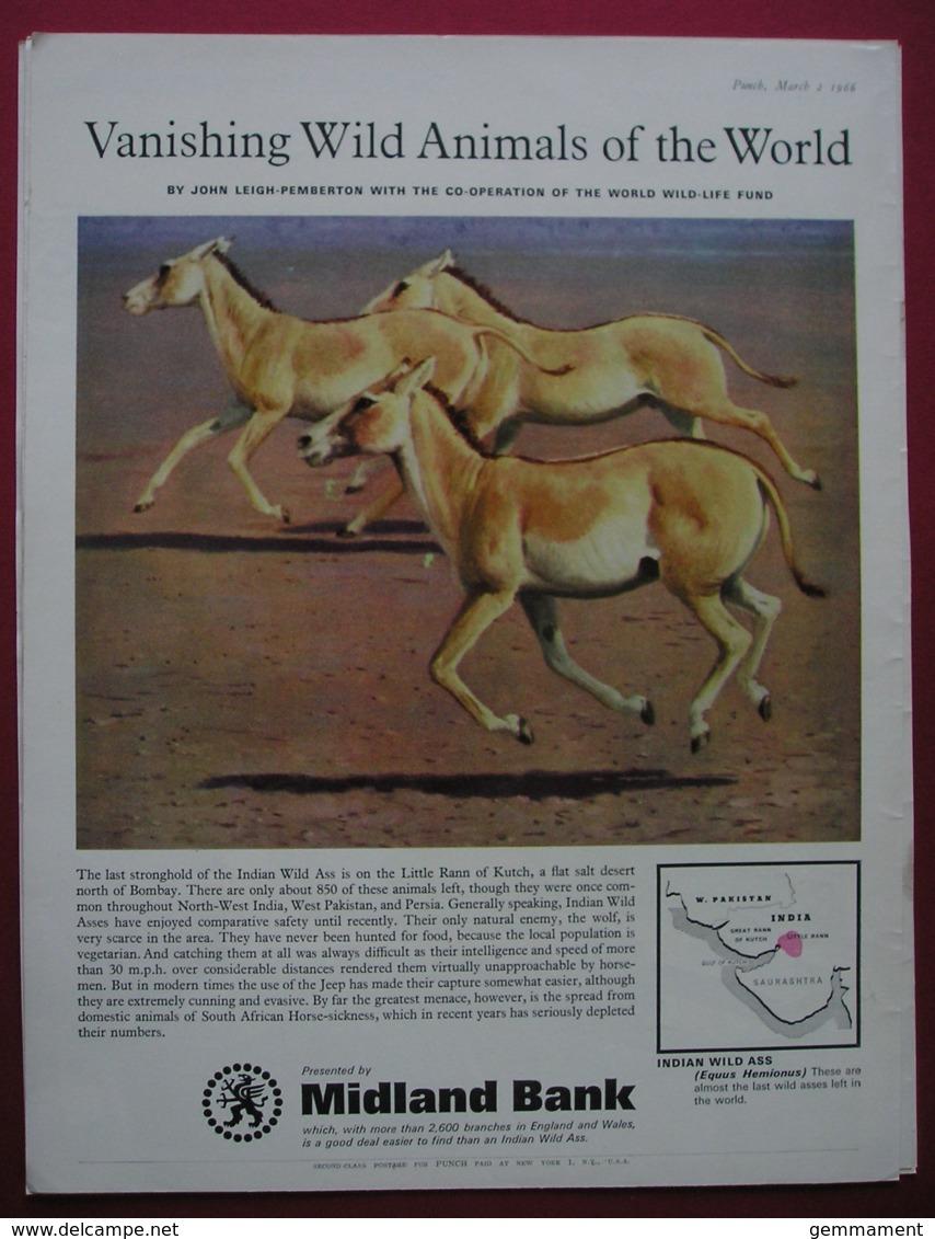 MIDLAND BANK -ORIGINAL 1966 MAGAZINE ADVERT. INDIAN WILD ASS - Advertising
