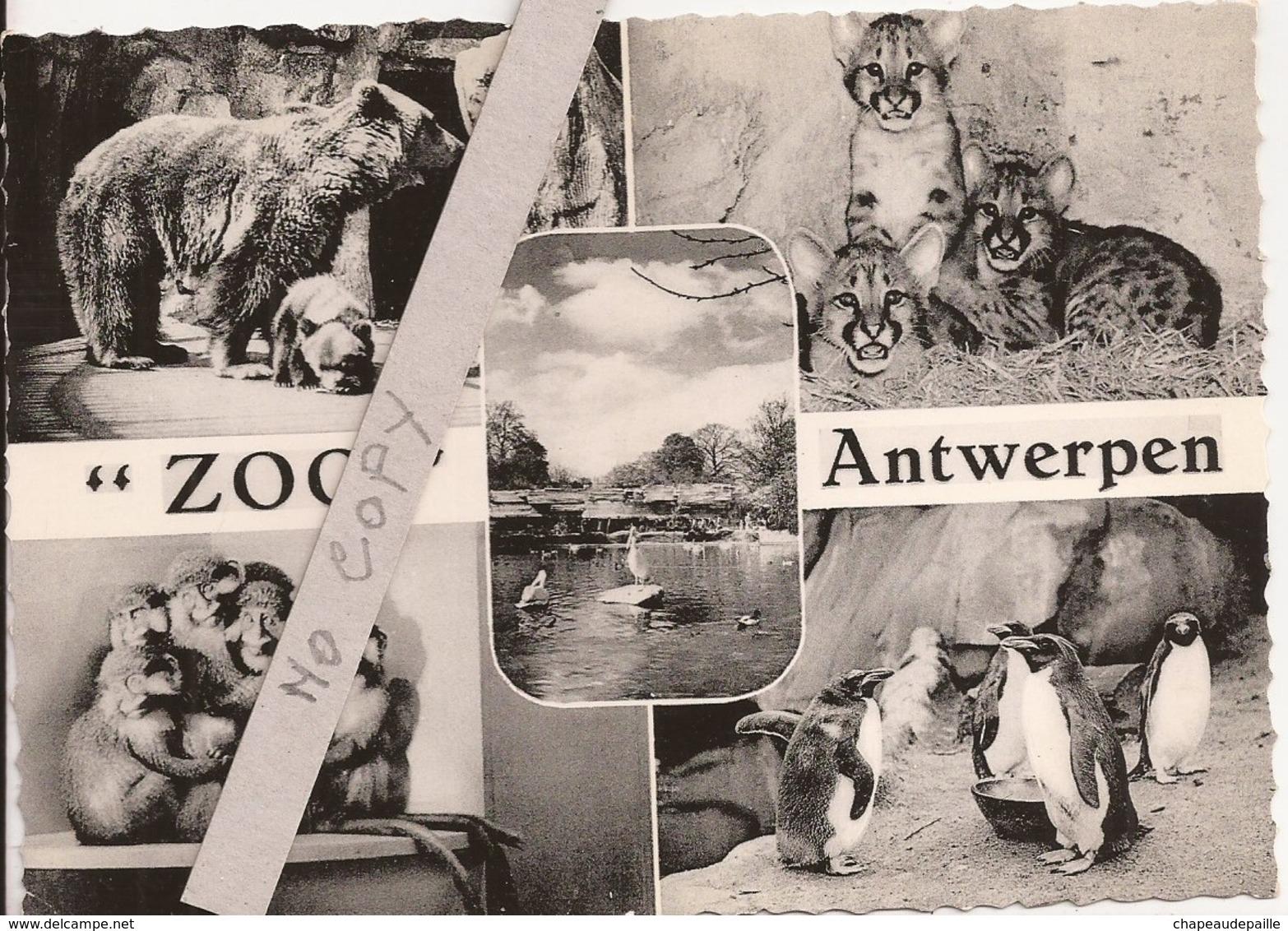 Zoo - Antwerpen - Antwerpen