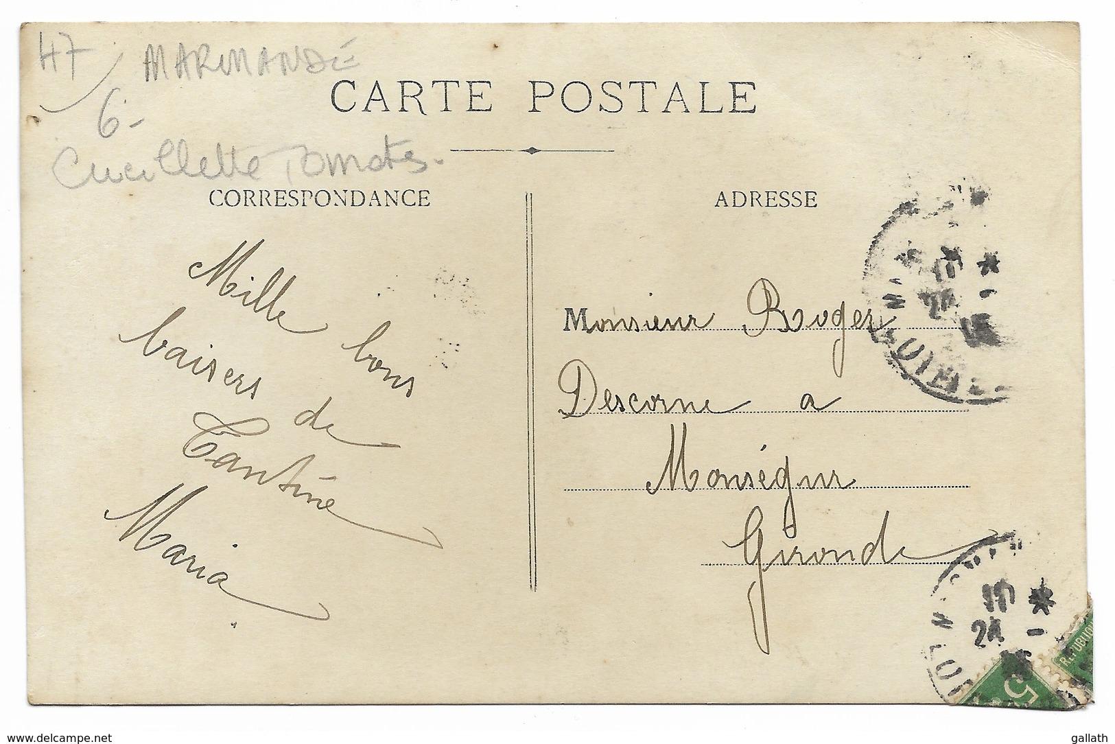 47-Environs MARMANDE-CARTE PHOTO-Récolte Des Tomates...1915  Animé - Marmande