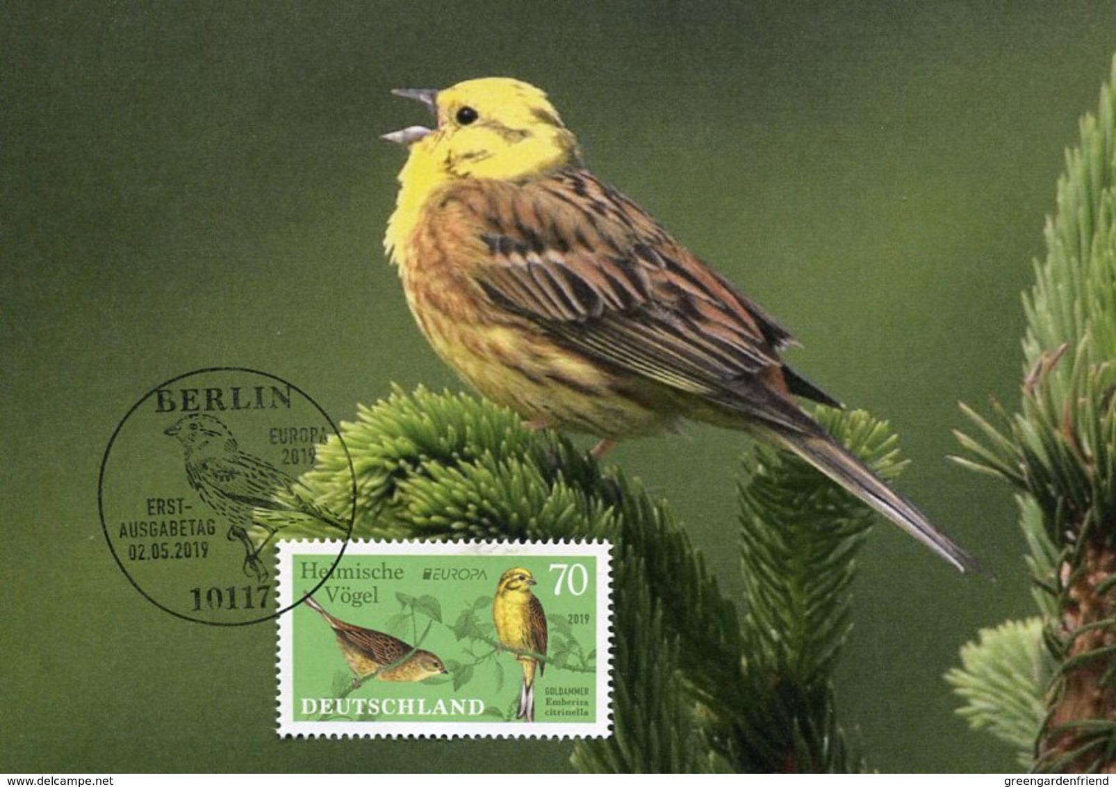 45133 Germany, Maximum 2019 Bird   Emberizia Citronella  Zigolo Giallo, Vogel, Oiseau - Uccelli Canterini Ed Arboricoli