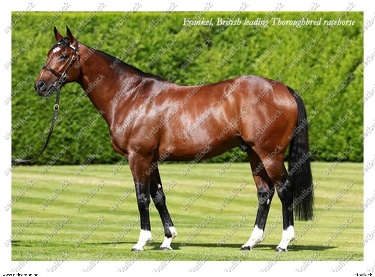 Ukraine   Postcard   Frankel   Leading Thoroughbred Racehorse   Horse - Chevaux