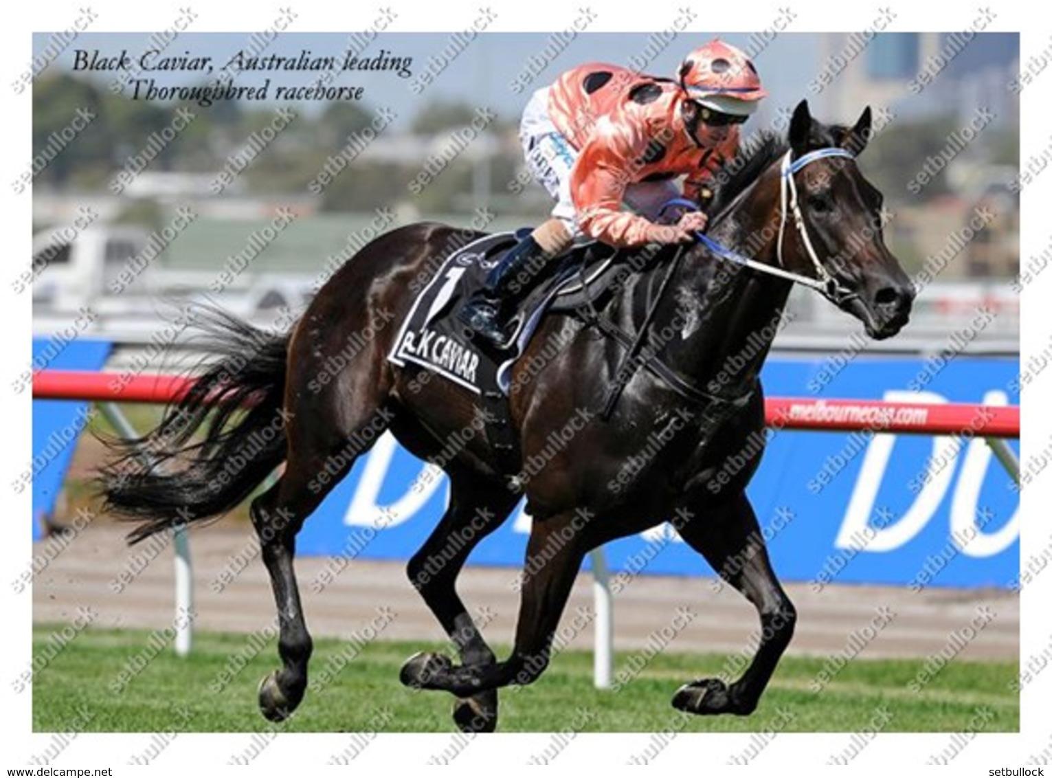 Ukraine   Postcard   Black Caviar   Leading Thoroughbred Racehorse   Horse - Chevaux
