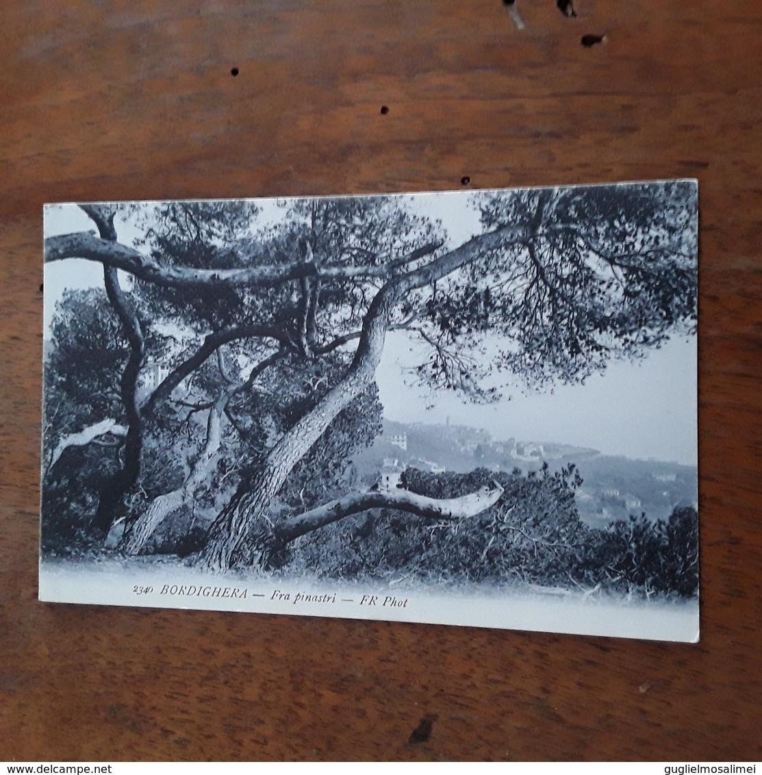 Cartolina Postale 1900, Bordighera Fra Pinastri - Imperia