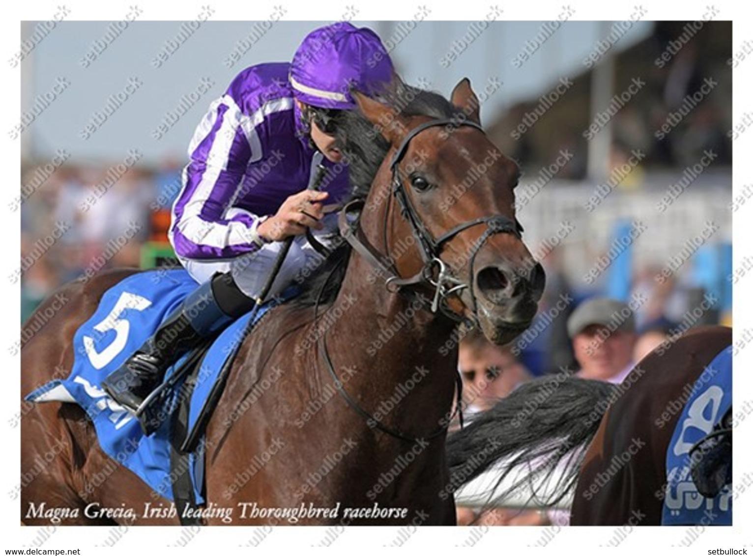 Ukraine   Postcard   Magna Grecia   Leading Thoroughbred Racehorse   Horse - Chevaux