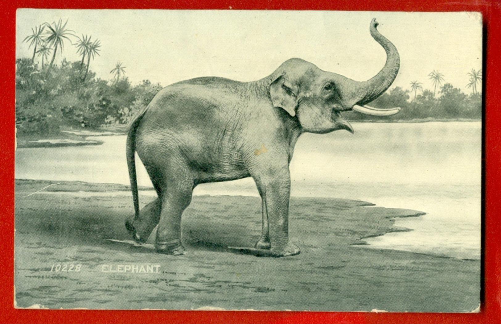 ELEPHANT VINTAGE POSTCARD USED 663 - Elefanten