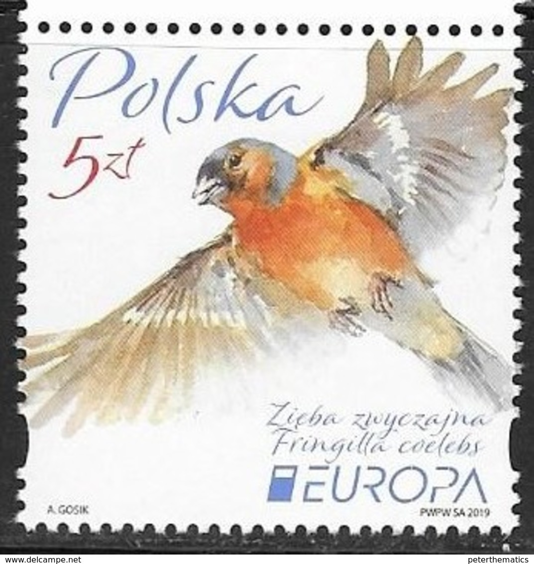 POLAND,  2019, MNH, EUROPA, BIRDS, 1v - 2019