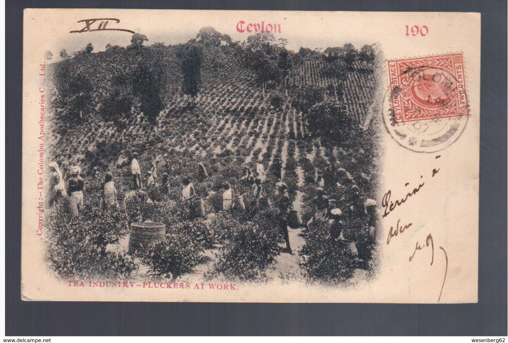 CEYLON Tea Industry - Pluckers At Work 1907 OLD POSTCARD - Sri Lanka (Ceylon)