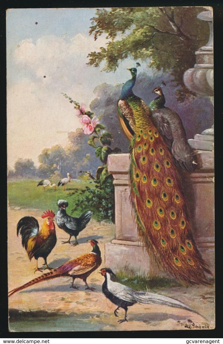 Haan Fazant - Oiseaux