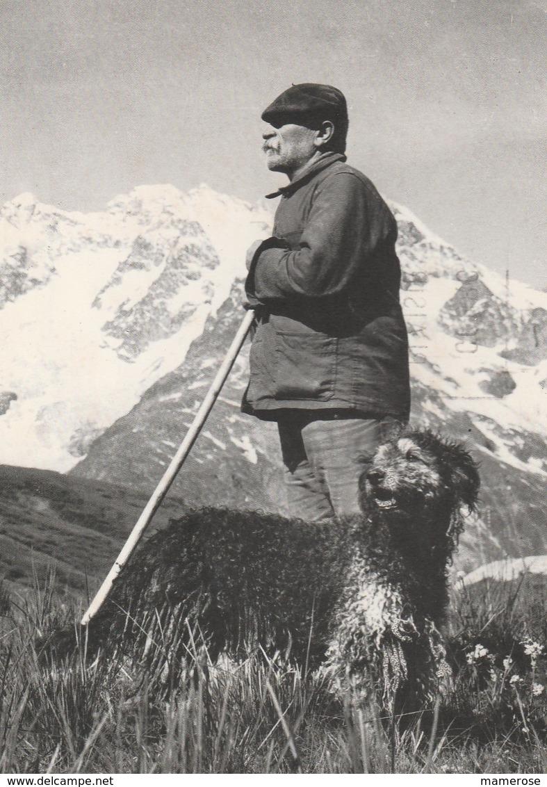 LE BERGER Appuyé Sur Son Bâton Et Son Chien En Montagne - Breeding