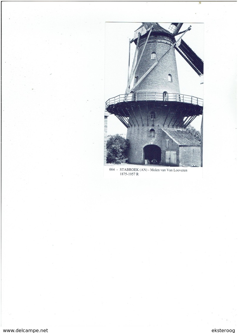 Stabroek 664 - Molen Van Van Looveren - 1875-1957 R - Stabroek