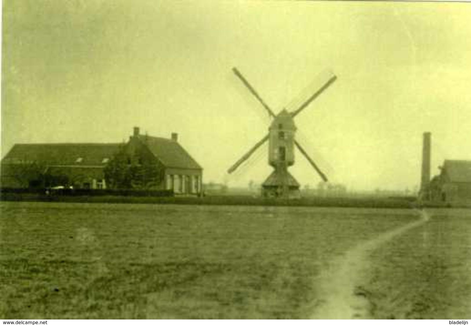 RIJKEVORSEL (Antwerpen) - Molen/moulin - Zeldzame Oude Opname Van De Verdwenen Staakmolen En Stoommaalderij Ca. 1930 - Rijkevorsel
