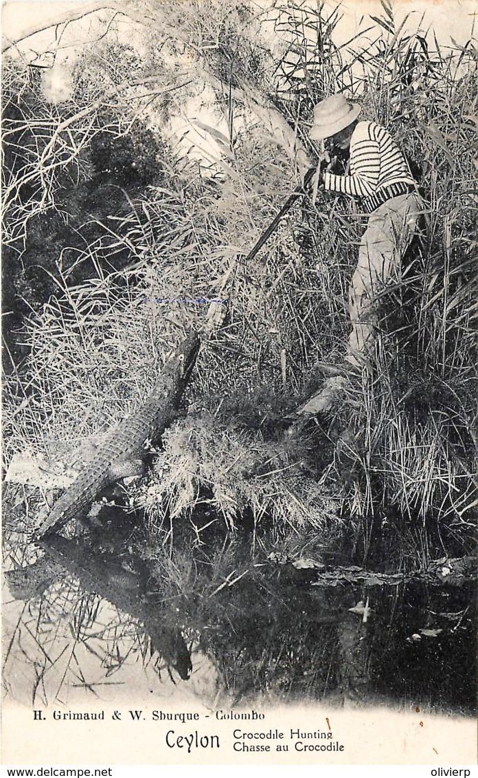 Sri-Lanka- Ceylon - Crocodile Hunting - Chasse Au Crocodile - Sri Lanka (Ceylon)