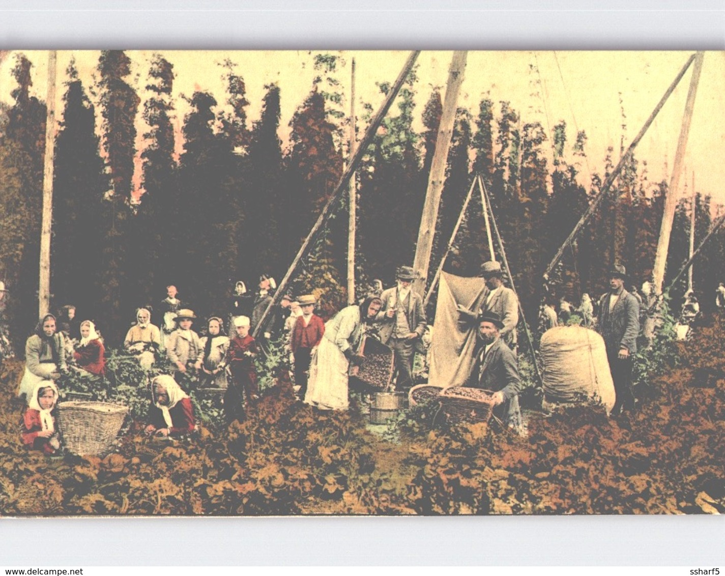 Gruss Aus HORESEDLY HORESEDL Farbelitho TRAUBENLESE VENDANGES WINE HARVEST 1914 - Tschechische Republik