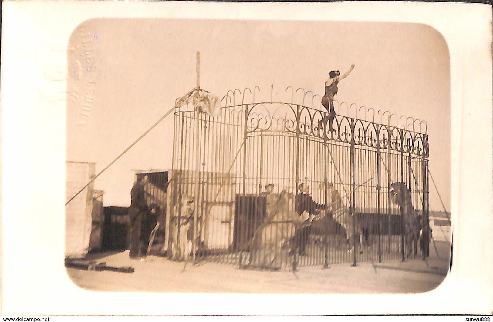 Namur Citadelle - Lot 3 Cartes Photo Cirque Cage Aux Fauves, Lions + Danseuses (top Animation Et Top RARE) - Namur
