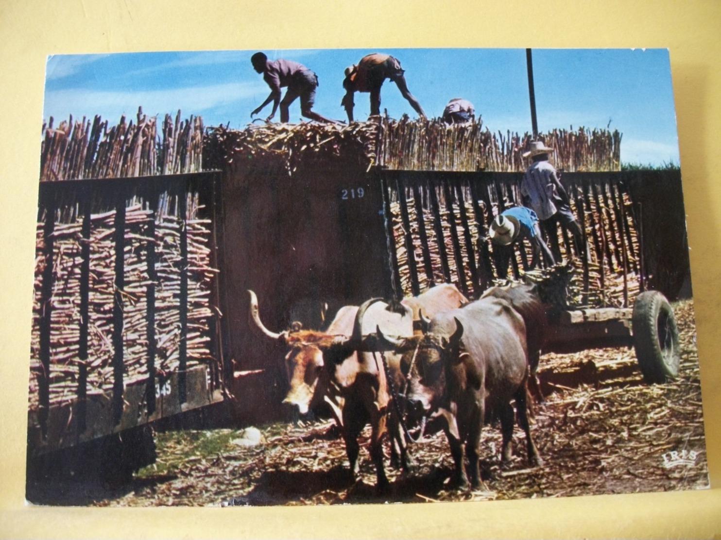 B21 3290 CPM. HAÏTI. CHARGEMENT DE CANNES A SUCRE. LOADING OF SUGAR-CANE - ANIMATION. ATTELAGE DE BOEUFS - Otros
