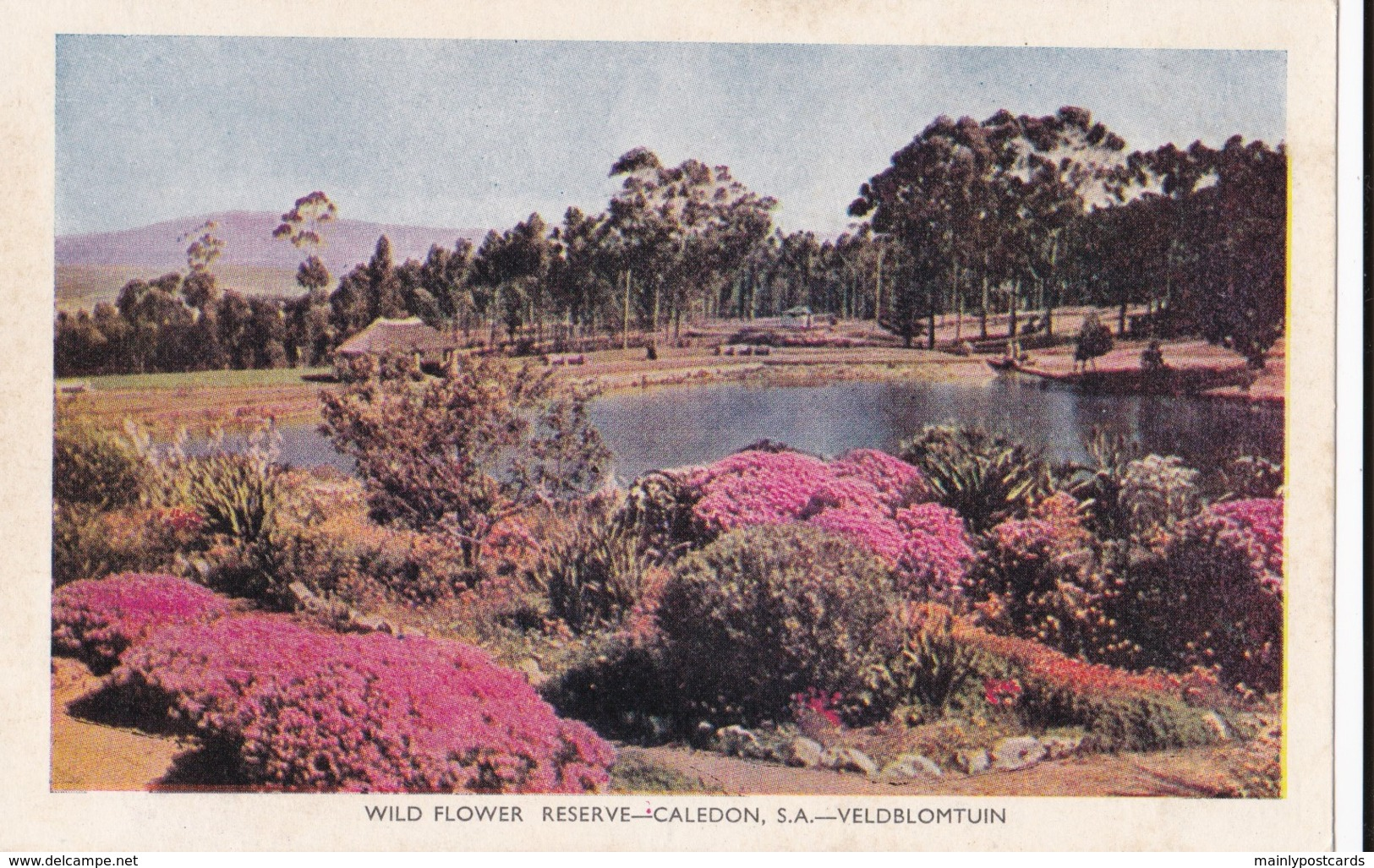 AP56 Wild Flower Reserve, Caledon, S.A., Veldbloemtuin - South Africa