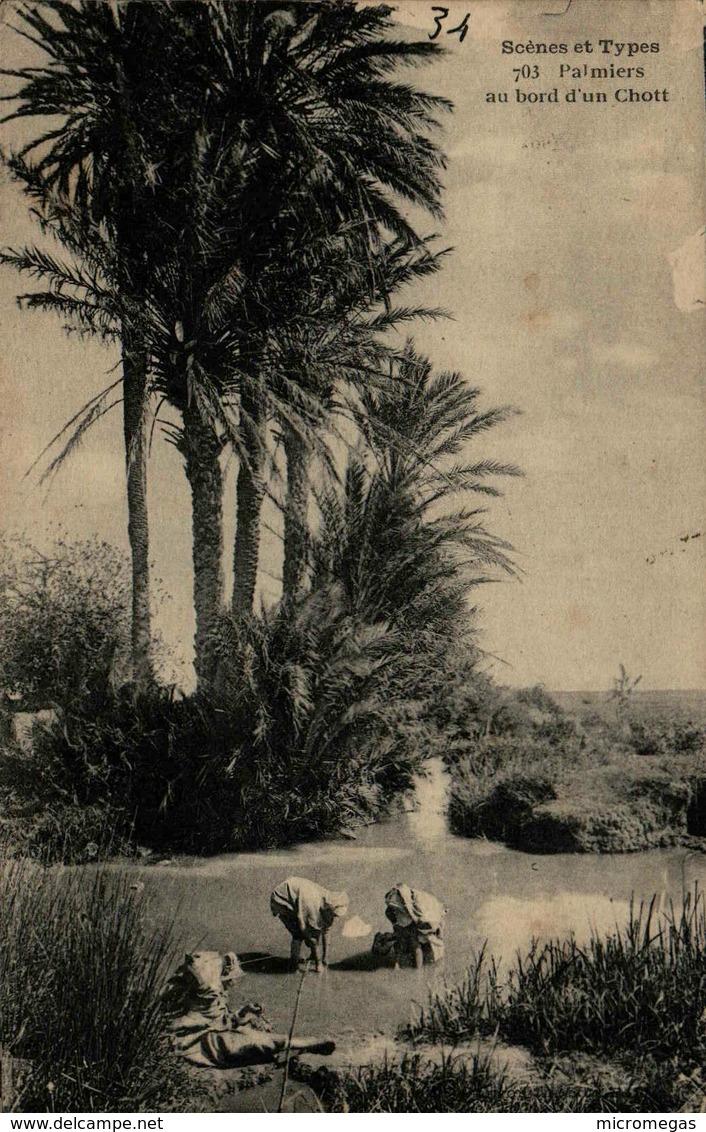 Algérie - Palmiers Au Bord D'un Chott - Scènes & Types