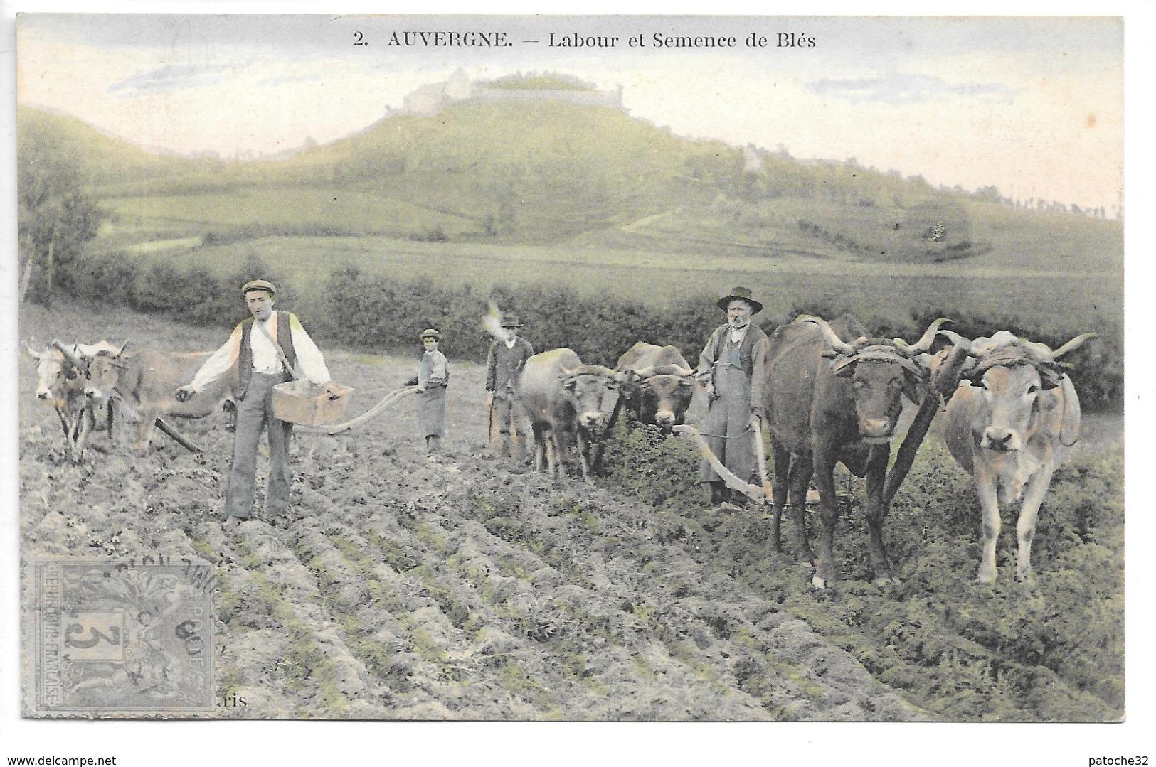 Cpa...auvergne...labour Et Semence De Blés......animée...trois Attelages De Deux Boeufs...1906... - Attelages