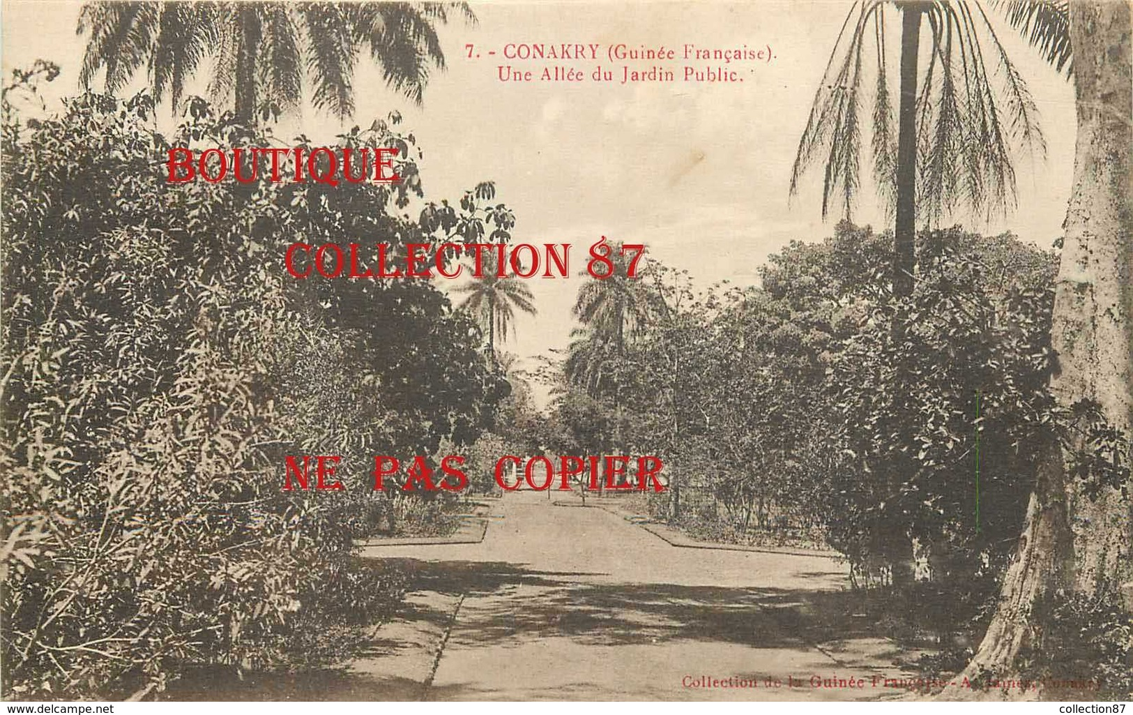 ☺♦♦ GUINEE - CONAKRY - UNE ALLEE Du JARDIN PUBLIC < N° 7 Edition A. James - French Guinea