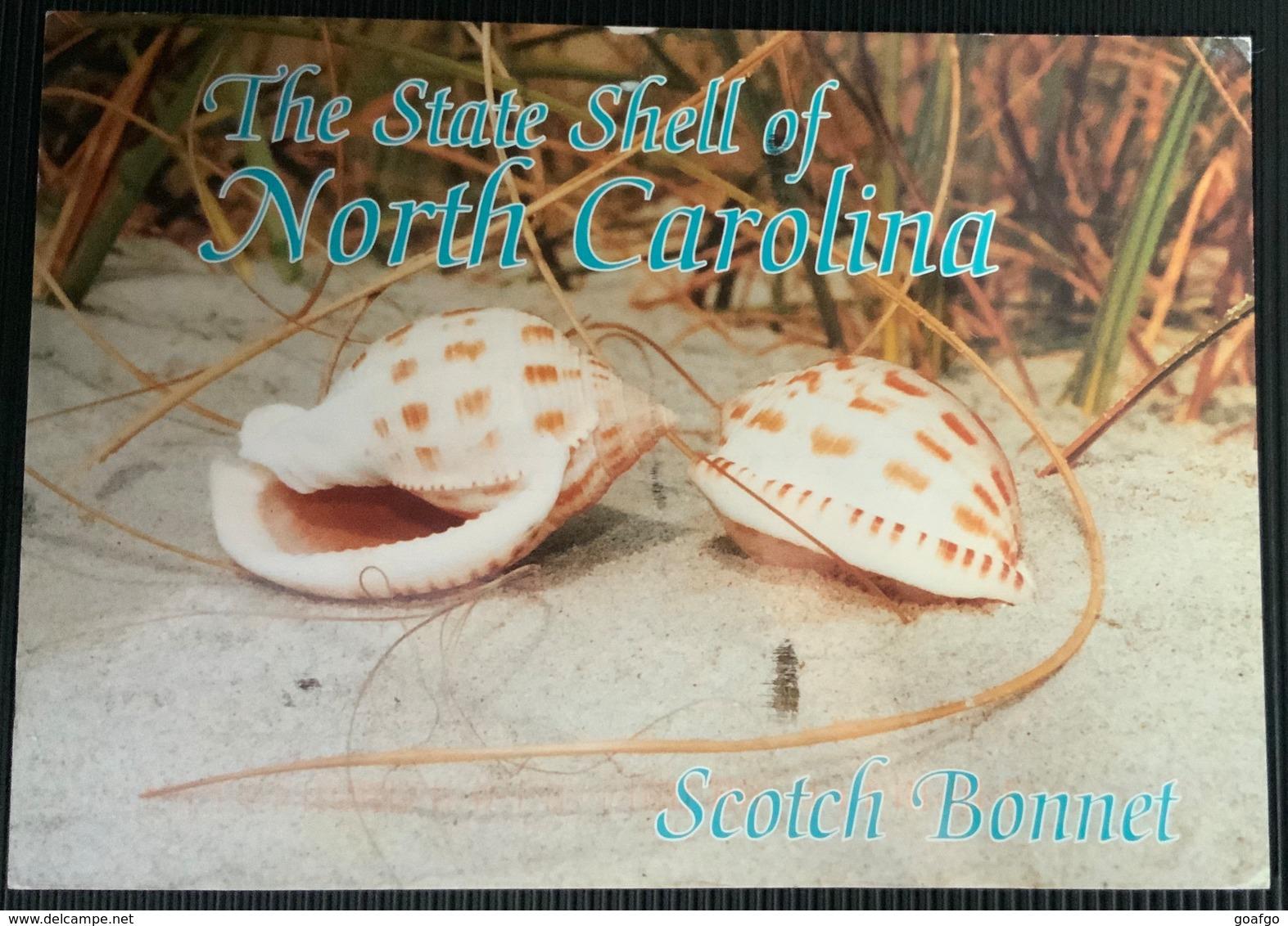 AK USA The State Shell Of North Carolina ...Muscheln ...Shells - Vissen & Schaaldieren