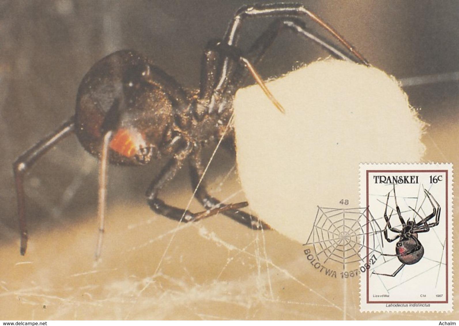 Transkei - Maximum Card Of 1987 - MiNr. 206 - Spiders - Latrodectus Indistinctus - Transkei