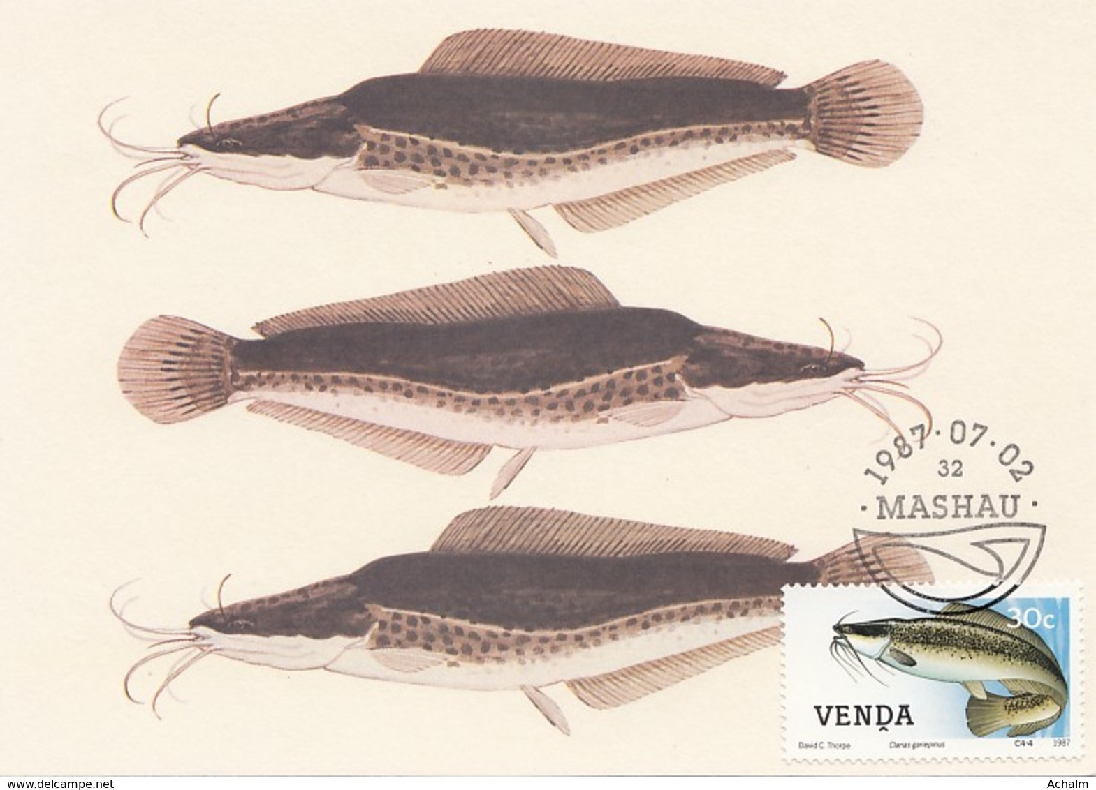 Venda - Maximum Card Of 1987 - MiNr. 162 - Freshwater Fish - Clarias Gariepinus - Venda