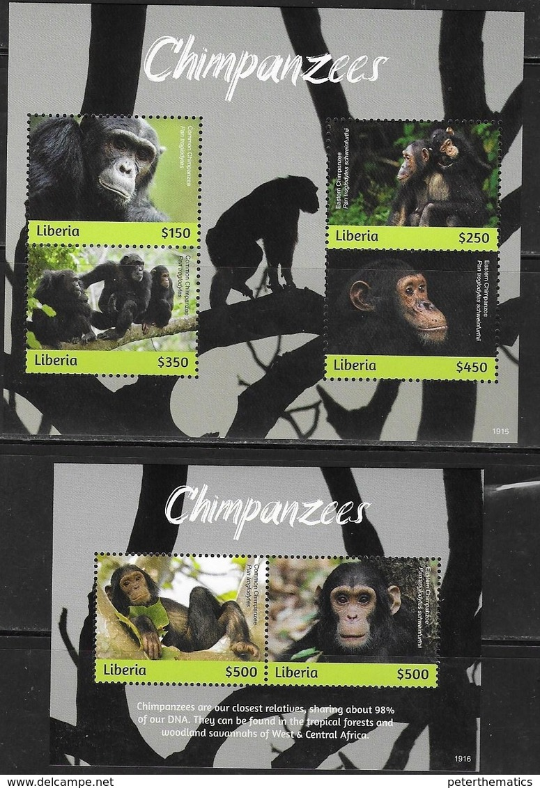LIBERIA, 2019, MNH,PRIMATES, CHIMPANZEES , 2 SHEETLETS ,  HIGH FV - Chimpanzees
