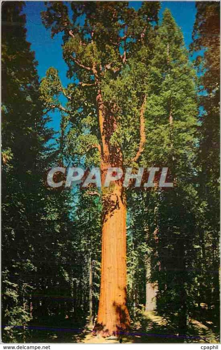 CPM Sequoia National Park California General Sherman Tree - Etats-Unis
