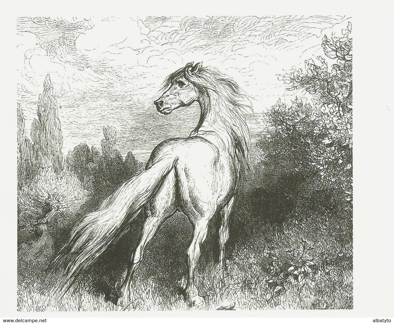Gravure Cheval Sauvage Horse Caballo - Altri
