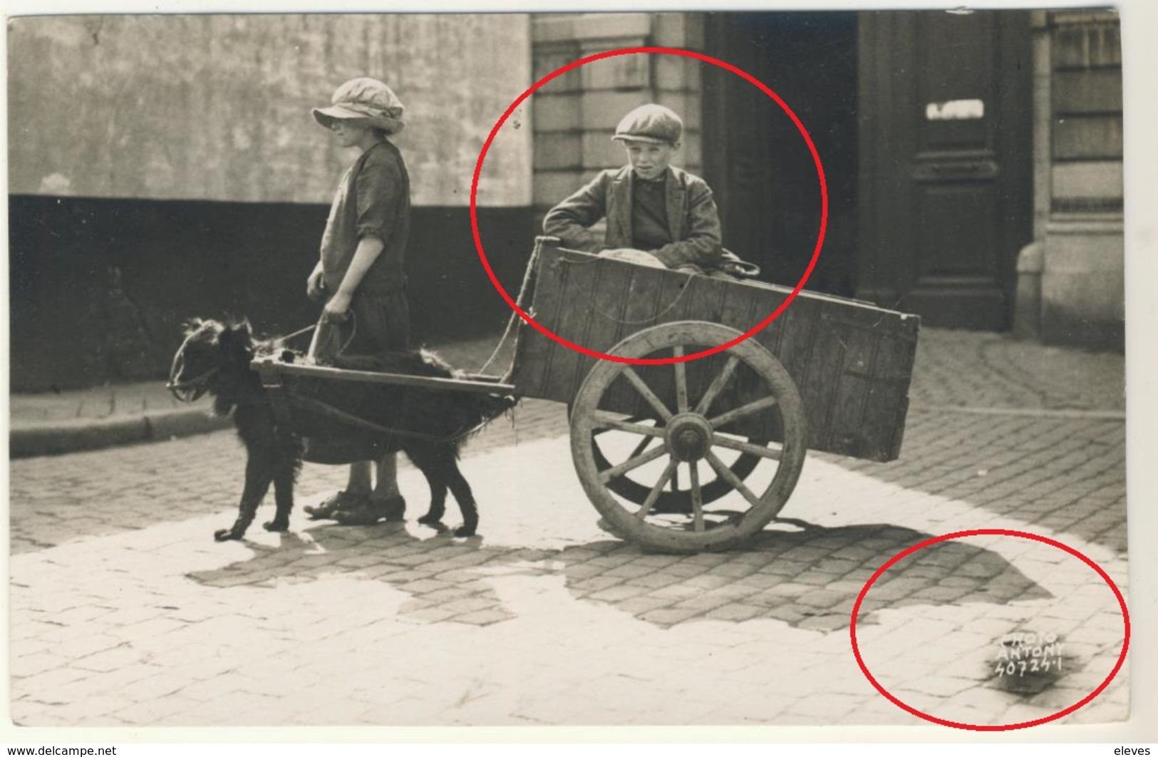 Oostende Zeer Mooie Fotokaart Honden Karretje Photo Antony Ostende 1924 - Oostende