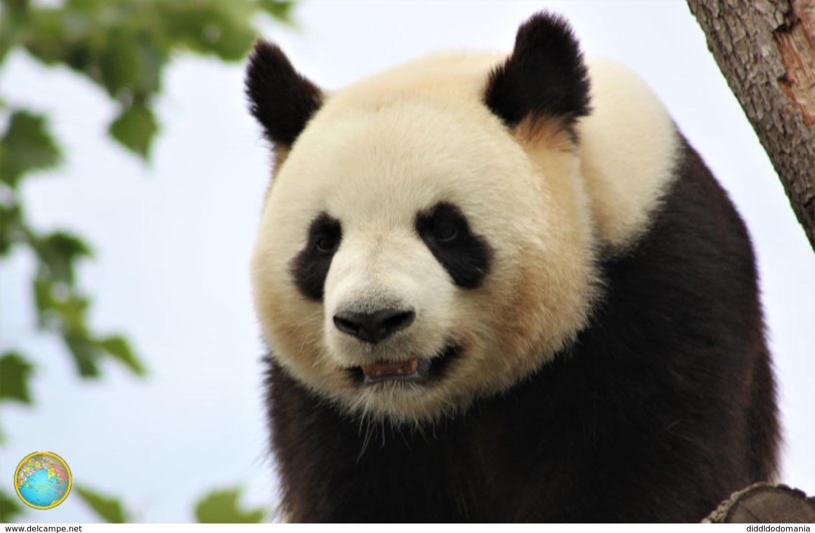 1 Magnet Neuf Theme Animaux Panda - Animali & Fauna