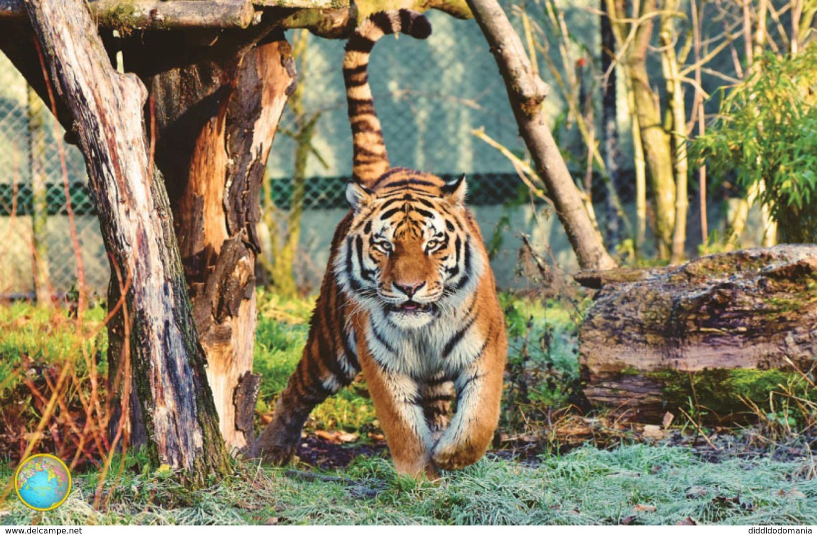 1 Magnet Neuf Theme Animaux Tigre - Animali & Fauna
