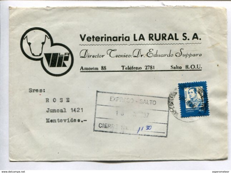 "VETERINARIA ""LA RURAL"" ENVELOPE COMMERCIAL CIRCULATED FROM SALTO TO MONTEVIDEO, URUGUAY 1987. EXPRESO EXPRESS -LILHU - Uruguay"