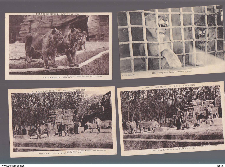 Animaux / Lions En Zoos / Lot De 6 CP / Lionne, Gardien, Louve Poldi Et Ses Louveteaux, Paris 1937 - Lions