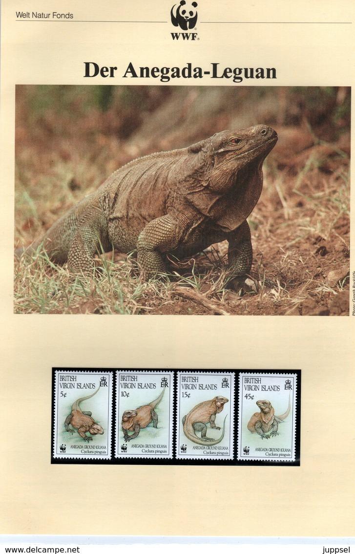 WWF Kapitel, BRITISCHE  JUNFERNINSELN,  ANEGA  LEGUAN,  1994 - W.W.F.