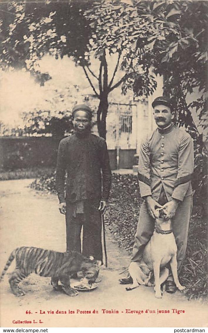 Vietnam - Breeding A Tiger Cub In A Military Outpost In Upper Tonkin - Publ. L.L. 66. - Vietnam