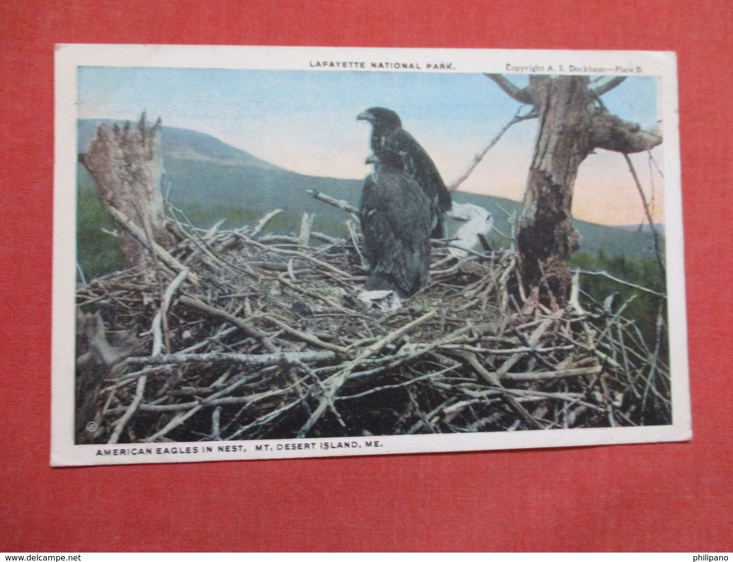 American Eagles In Nest  Mt. Desert Island Me.    Ref    3594 - Birds