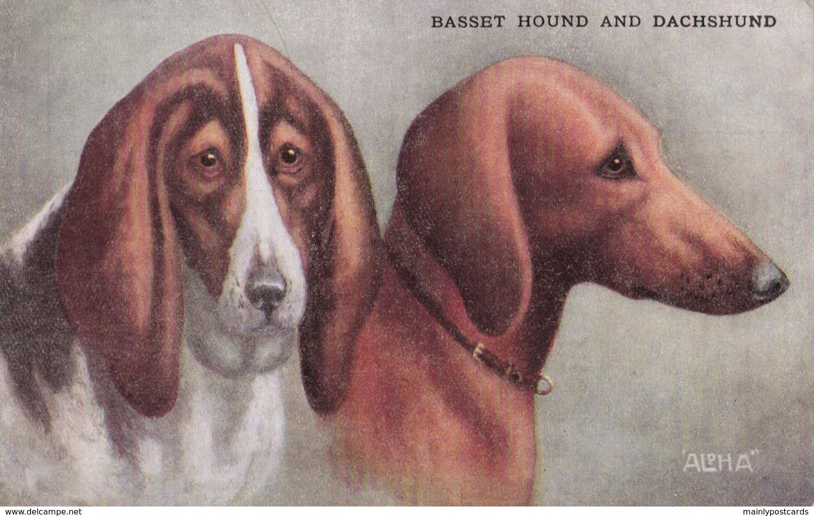 AS91 Animals - Dog - Basset Hound And Dachshund - Dogs